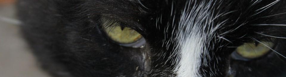 Feral Cat Love
