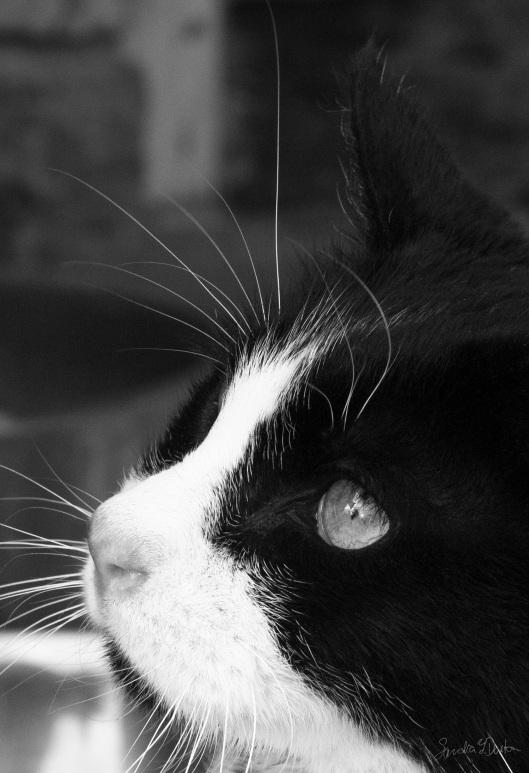 Gorgeous in Profile thumb.jpg